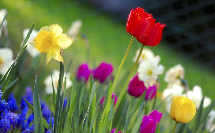 Aria di primavera: i fiori più belli della stagione